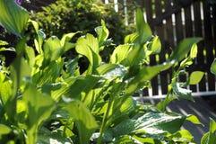 Jardim da manhã Fotografia de Stock