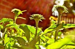 Jardim da manhã Fotos de Stock
