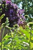 Jardim da manhã foto de stock