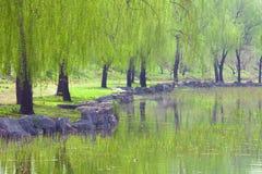 Jardim da mola Foto de Stock Royalty Free
