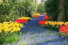 Jardim da mola Fotografia de Stock Royalty Free