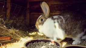 Jardim da mola - coelho em uma gaiola vídeos de arquivo
