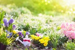 Jardim da mola com flores Ferramentas de jardinagem novas, bandeja do bastão Fotos de Stock Royalty Free