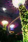 Jardim da noite pela baía tree6 Imagem de Stock Royalty Free