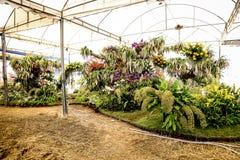 Jardim da orquídea Fotografia de Stock Royalty Free