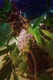 Jardim da orquídea da flor na primavera Folha Flor Prado Argricutule nave naughty Flor para o women& x27; dia de s imagem de stock