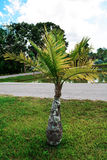 Jardim da palma Fotos de Stock Royalty Free