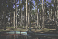 Jardim da palma, Paramaribo, Suriname Imagem de Stock