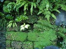 jardim da parede de sochi Imagens de Stock