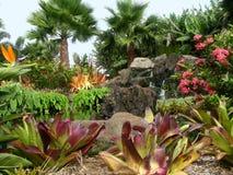 Jardim da plantação de Dole imagens de stock