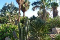 Jardim da planta Foto de Stock