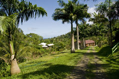 Jardim da propriedade de Grenada. foto de stock