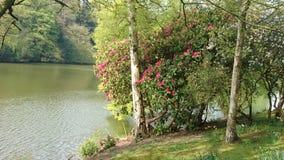 Jardim da propriedade de Harewood Imagem de Stock