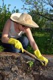 Jardim da remoção de ervas daninhas Fotos de Stock Royalty Free