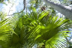 Jardim da selva Plantas tropicais E imagem de stock royalty free