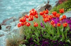 Jardim da tulipa com fundo do lago Fotografia de Stock Royalty Free