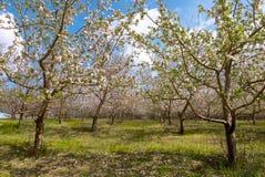 Jardim das árvores de Apple Fotografia de Stock