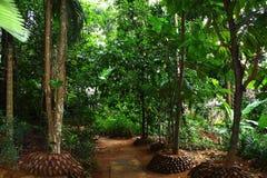 Jardim das especiarias e das ervas Imagens de Stock