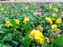 Jardim das flores Fotografia de Stock Royalty Free