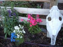 Jardim das flores da exploração agrícola do país fotografia de stock royalty free
