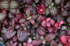 Jardim das folhas coloridas tonificadas escuras imagem de stock