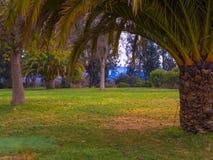 Jardim das palmas Fotografia de Stock Royalty Free