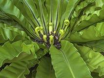 Jardim das plantas Fotografia de Stock Royalty Free