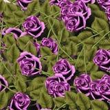 Jardim das rosas Fotos de Stock