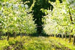 Jardim de árvores de maçã plantadas em um dia bonito Boa colheita fotos de stock