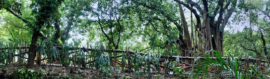 Jardim de árvores tropicais. Cerca longa. Imagens de Stock Royalty Free