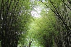 Jardim de bambu Fotos de Stock