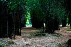 Jardim de bambu Fotografia de Stock