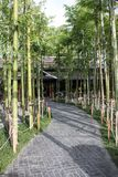 Jardim de bambu japon?s no caf? Chiang Mai Tail?ndia de Nekoemon imagem de stock