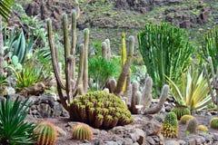 Jardim de Cactoo Foto de Stock