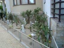 Jardim de Cactoo fotografia de stock royalty free