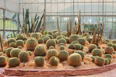 Jardim de Cactoo Fotos de Stock