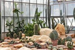 Jardim de Cactoo Foto de Stock Royalty Free