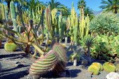 Jardim de Cactoo Imagens de Stock Royalty Free