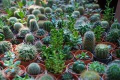 Jardim de cactus2 Foto de Stock