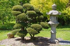 Jardim de chá japonês Foto de Stock Royalty Free