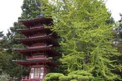 Jardim de chá japonês Fotos de Stock Royalty Free