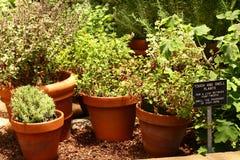 Jardim de erva Fotos de Stock Royalty Free
