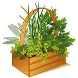 jardim de erva de +EPS na cesta de madeira Fotos de Stock Royalty Free