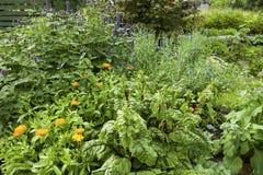 Jardim de ervas fotos de stock royalty free