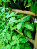 Jardim de ervas vertical Foto de Stock