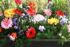 Jardim de flor Imagens de Stock Royalty Free