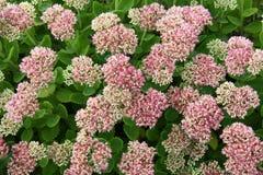 Jardim de flor Fotografia de Stock Royalty Free
