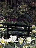 Jardim de flor Foto de Stock