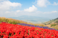 jardim de flor colorido Fotografia de Stock Royalty Free