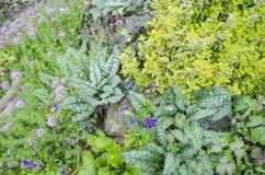 jardim de flor colorido Imagem de Stock Royalty Free